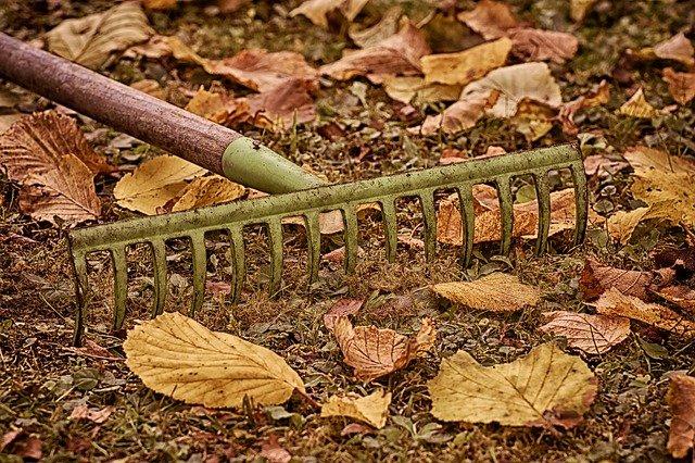 hrábě a listí